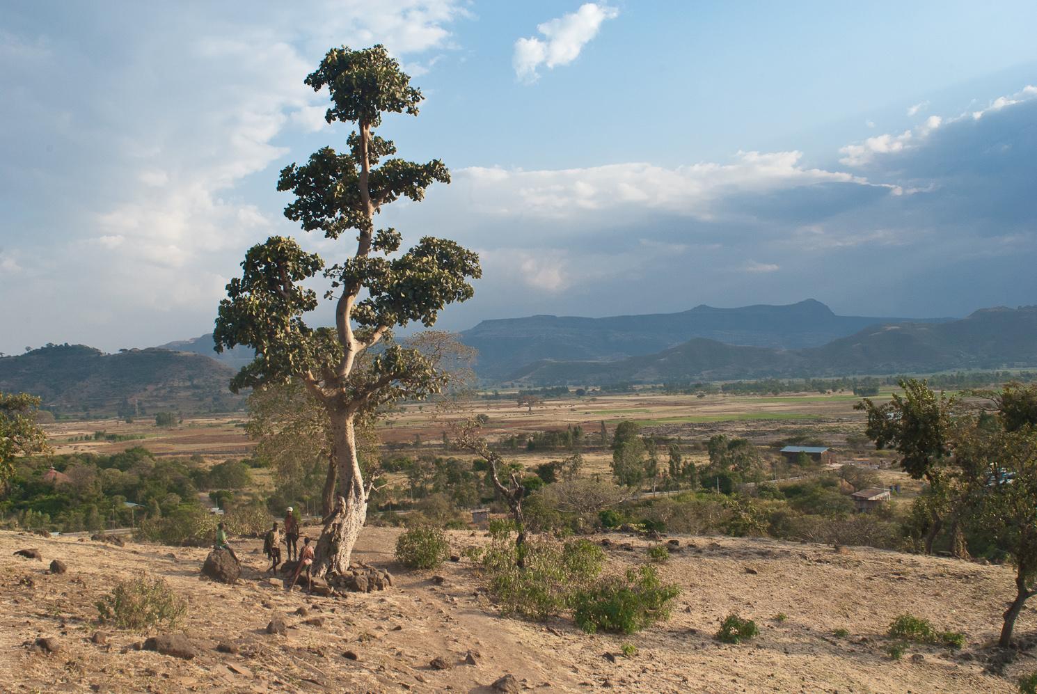 Ethiopia, Dancalia: a Walking Land